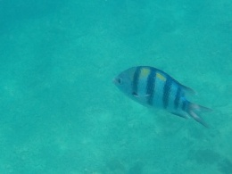 snorkeling time..