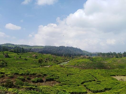 kebun teh Rancabali, Ciwidey